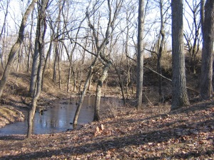 Remains of quarry.
