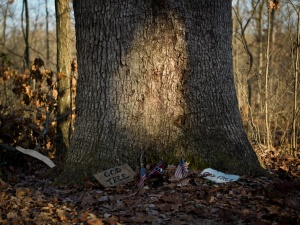 Culp's Hill White Oak, Gettysburg, Pennsylvania