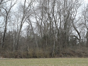 Henagan's Redoubt can be seen today as a low mound inside the treeline. It sits on private property.