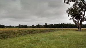 First Confederate line at Averasboro. A monument to the Union soldiers who fought at the battle in the right center of the picture. Col. Henry Case's brigade attacked from the far tree line.