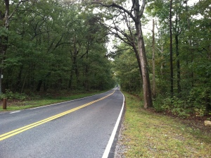 The Orange Plank Road in the Wilderness. Near the area of Longstreet's wounding. Photo by Kristopher D. White
