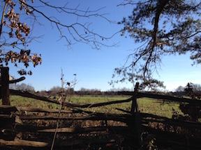 Payne's Farm Worm Fence
