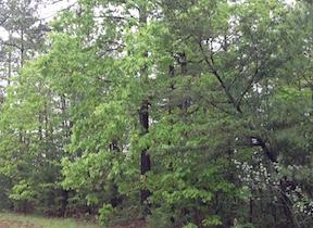 Wilderness Rainy Day