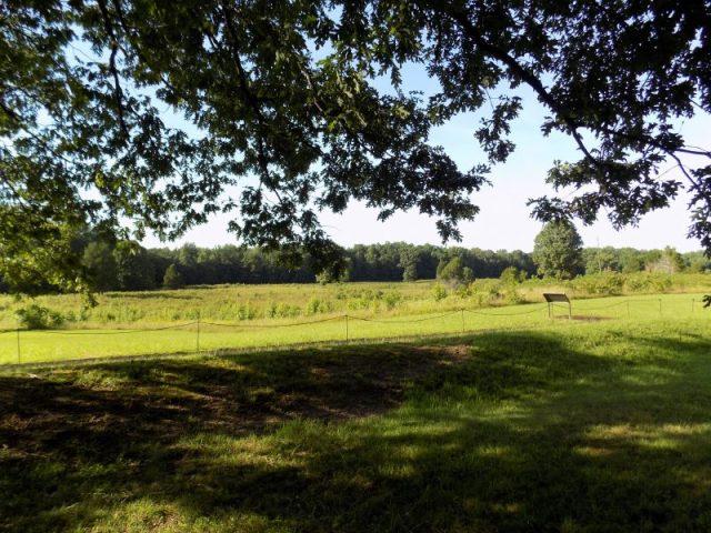 Summer Shadows at Spotsylvania; photography by Sarah Kay Bierle, 2016.