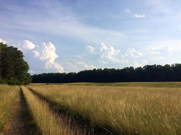 Lafleur Wilderness-field