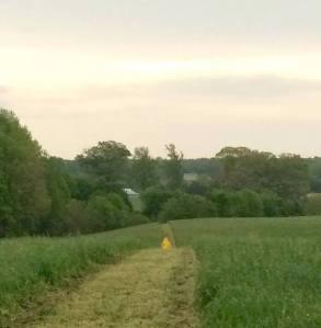 Lafleur Wilderness-pathway