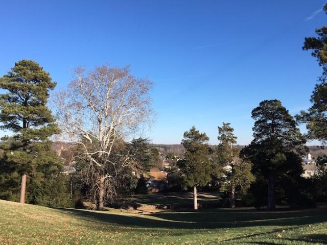 Brompton view 2017